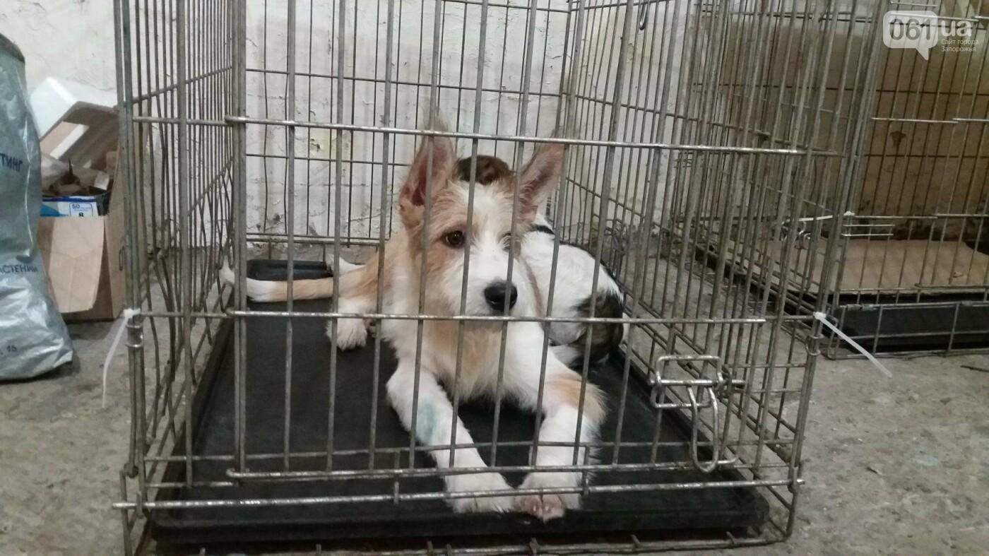 В Запорожье началась бесплатная стерилизация бездомных собак: как работает мобильная ветклиника, – ФОТОРЕПОРТАЖ, фото-14