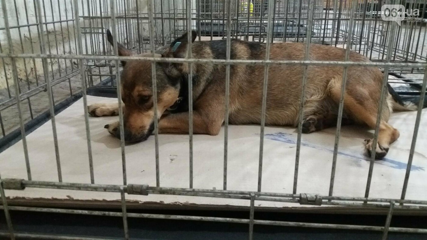 В Запорожье началась бесплатная стерилизация бездомных собак: как работает мобильная ветклиника, – ФОТОРЕПОРТАЖ, фото-13