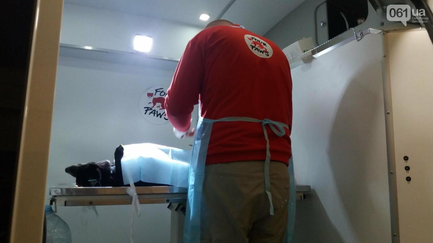 В Запорожье началась бесплатная стерилизация бездомных собак: как работает мобильная ветклиника, – ФОТОРЕПОРТАЖ, фото-4