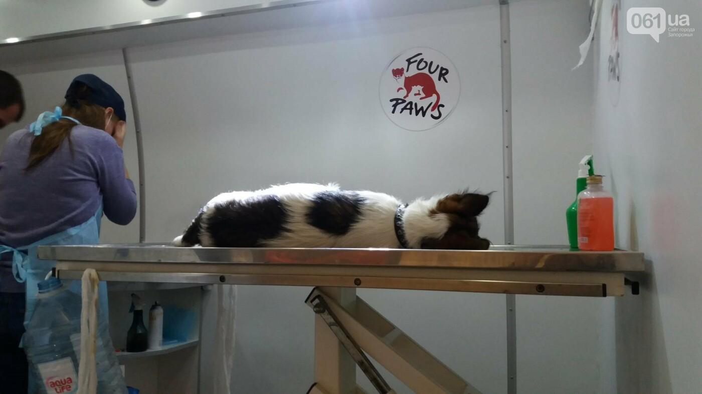 В Запорожье началась бесплатная стерилизация бездомных собак: как работает мобильная ветклиника, – ФОТОРЕПОРТАЖ, фото-2