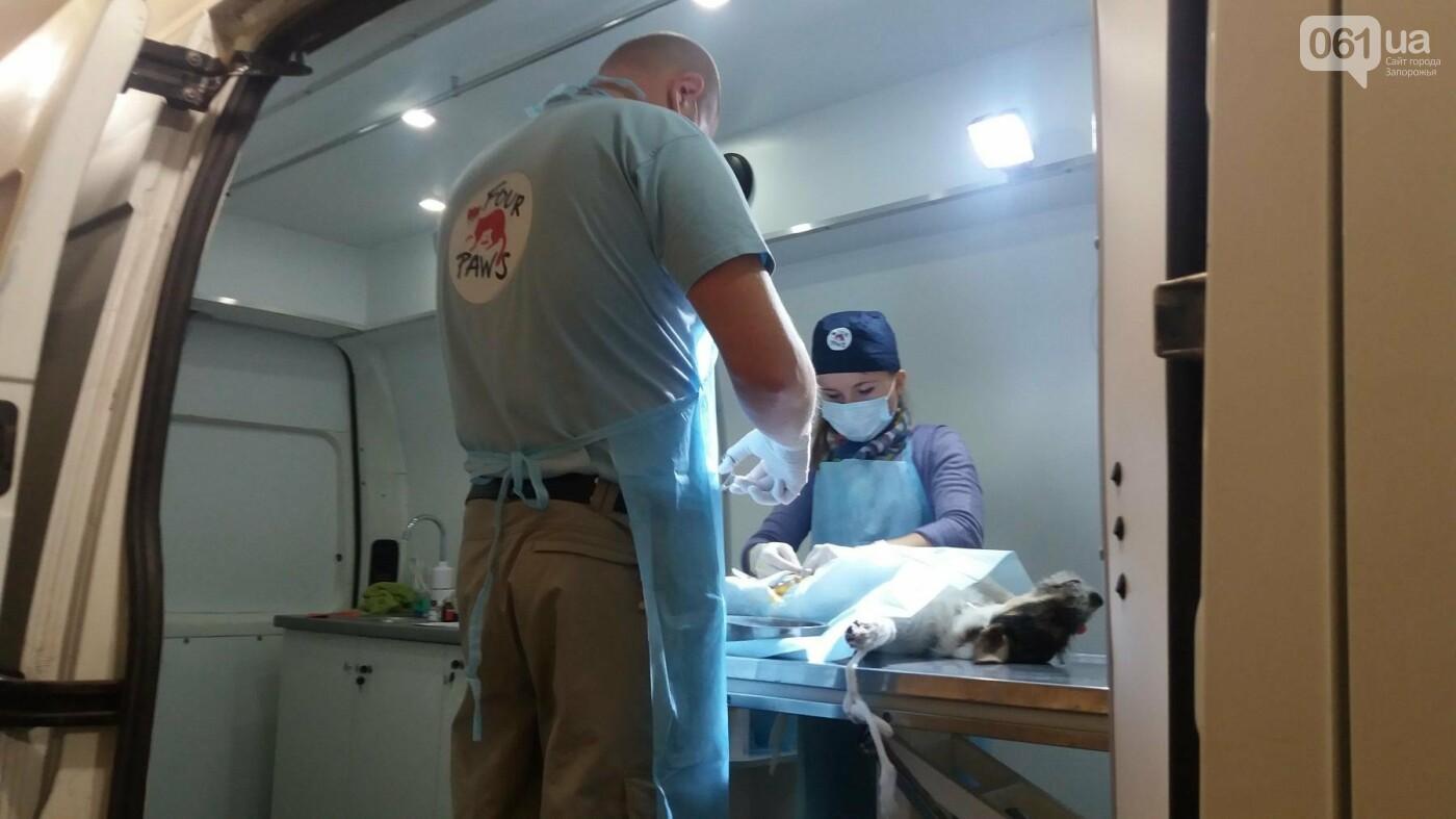 В Запорожье началась бесплатная стерилизация бездомных собак: как работает мобильная ветклиника, – ФОТОРЕПОРТАЖ, фото-1