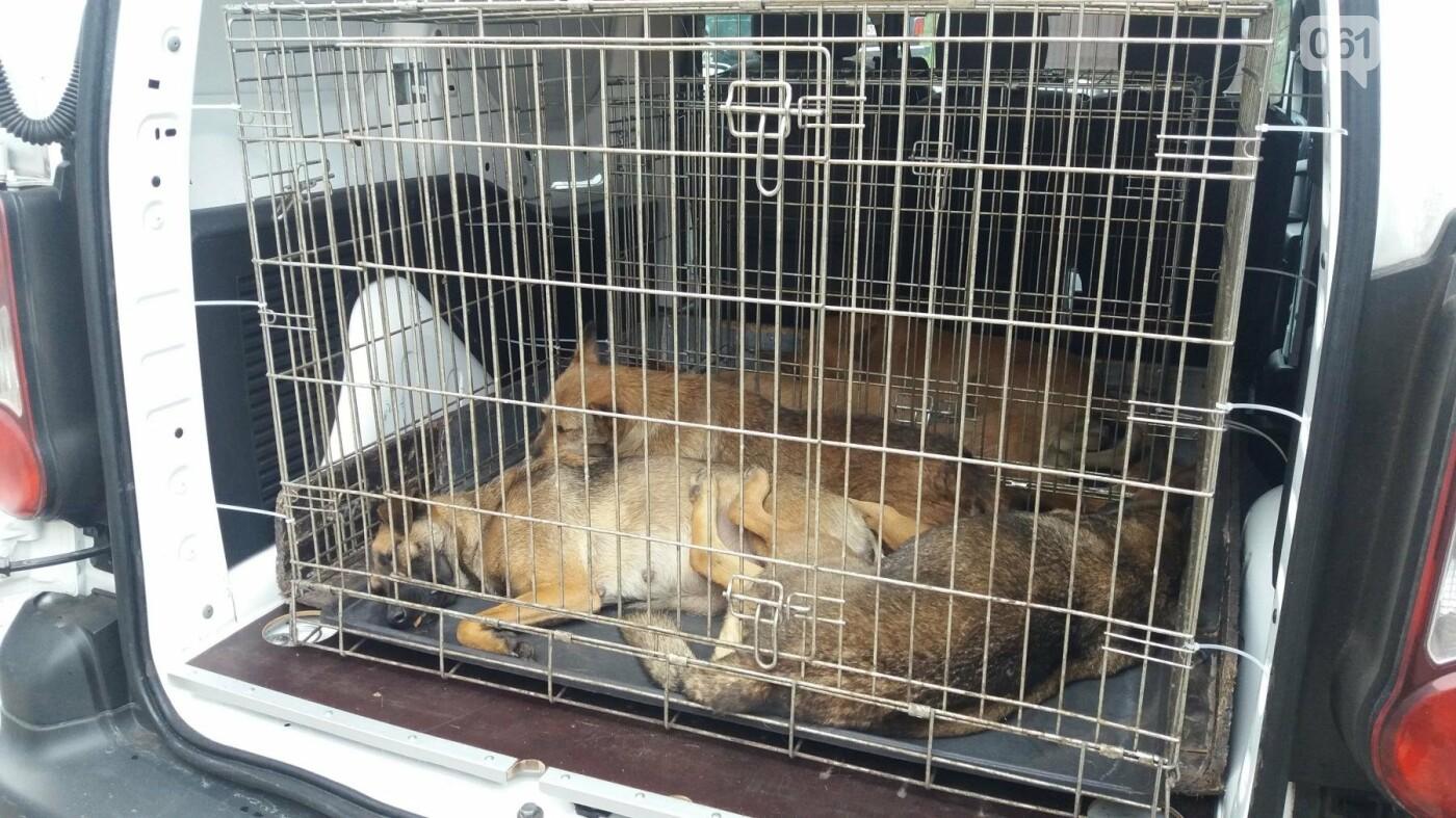 В Запорожье началась бесплатная стерилизация бездомных собак: как работает мобильная ветклиника, – ФОТОРЕПОРТАЖ, фото-7
