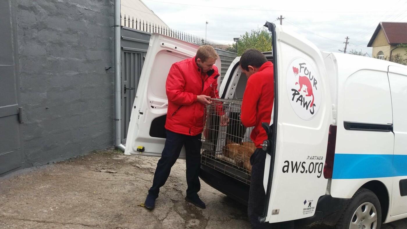 В Запорожье началась бесплатная стерилизация бездомных собак: как работает мобильная ветклиника, – ФОТОРЕПОРТАЖ, фото-9