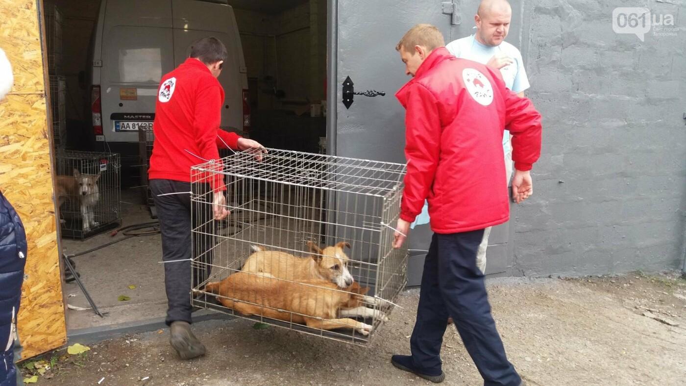 В Запорожье началась бесплатная стерилизация бездомных собак: как работает мобильная ветклиника, – ФОТОРЕПОРТАЖ, фото-8