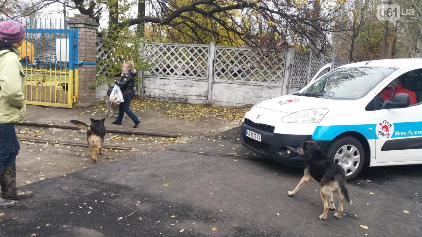 В Запорожье началась бесплатная стерилизация бездомных собак: как работает мобильная ветклиника, – ФОТОРЕПОРТАЖ, фото-10