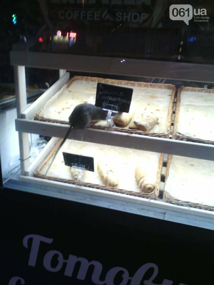 В киоске в центре Запорожья на выпечке сидела крыса, - ФОТО, фото-2