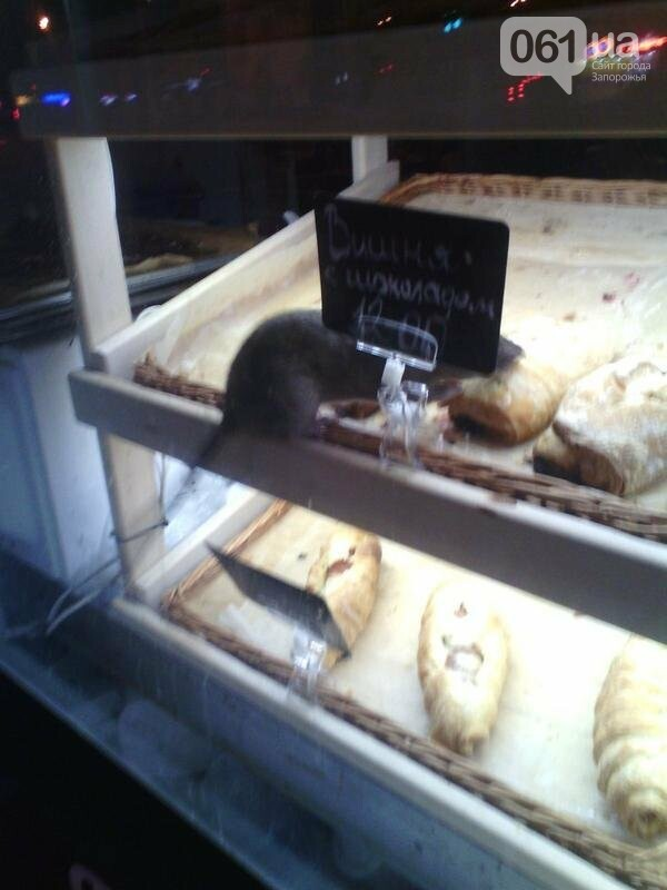 В киоске в центре Запорожья на выпечке сидела крыса, - ФОТО, фото-1