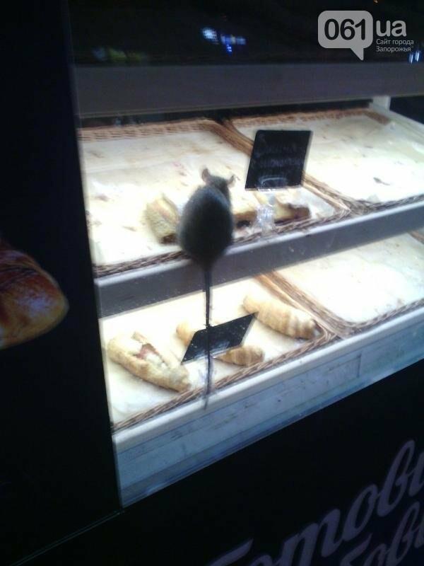 В киоске в центре Запорожья на выпечке сидела крыса, - ФОТО, фото-4