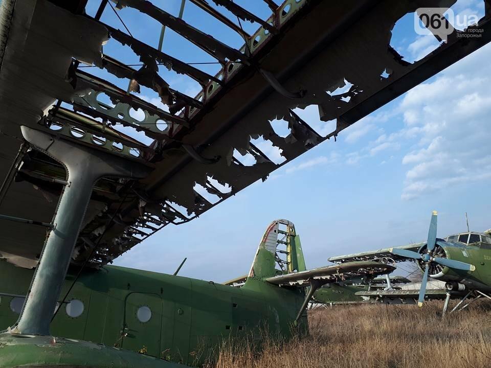 Разбитые самолеты и трава по колено: как сейчас выглядит аэродром в Широком, - ФОТО , фото-11