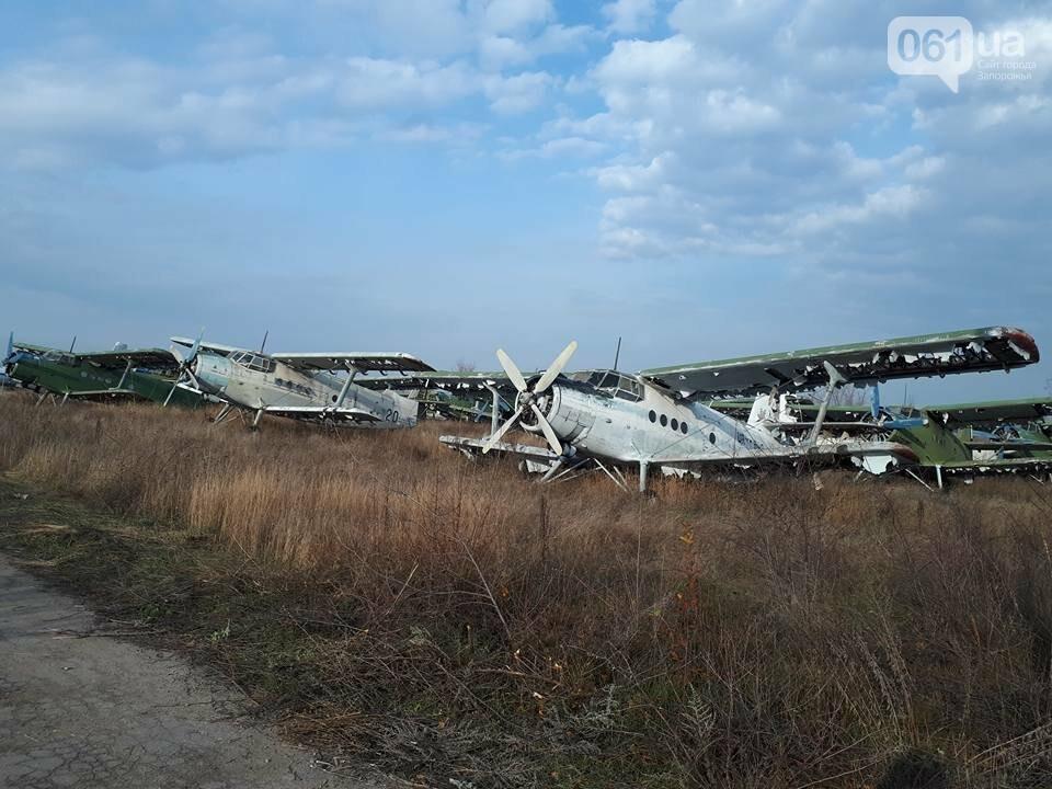 Разбитые самолеты и трава по колено: как сейчас выглядит аэродром в Широком, - ФОТО , фото-12