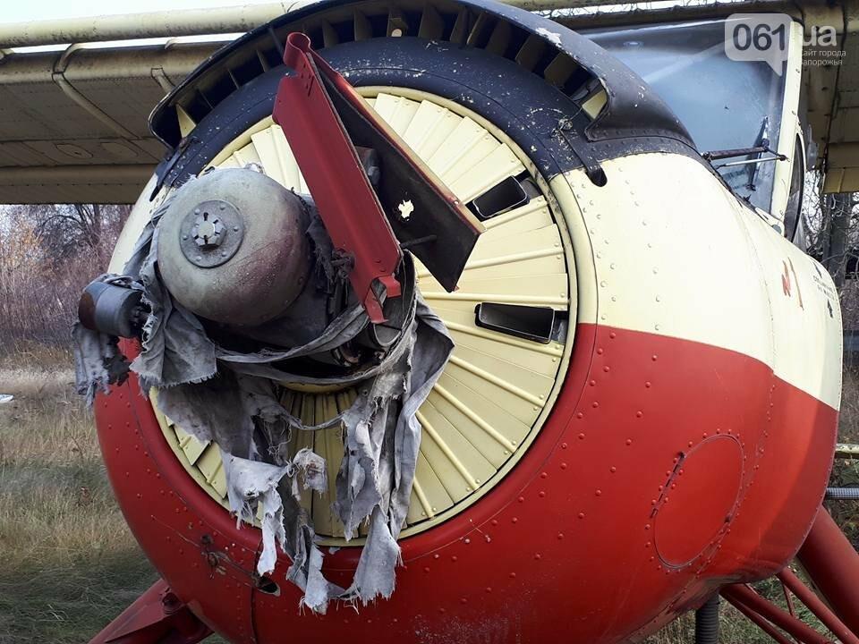 Разбитые самолеты и трава по колено: как сейчас выглядит аэродром в Широком, - ФОТО , фото-3
