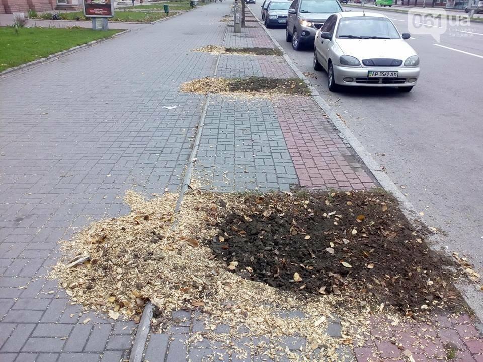 В Запорожье на проспекте спилили липы, посаженные при Поляке, - ФОТО, фото-2