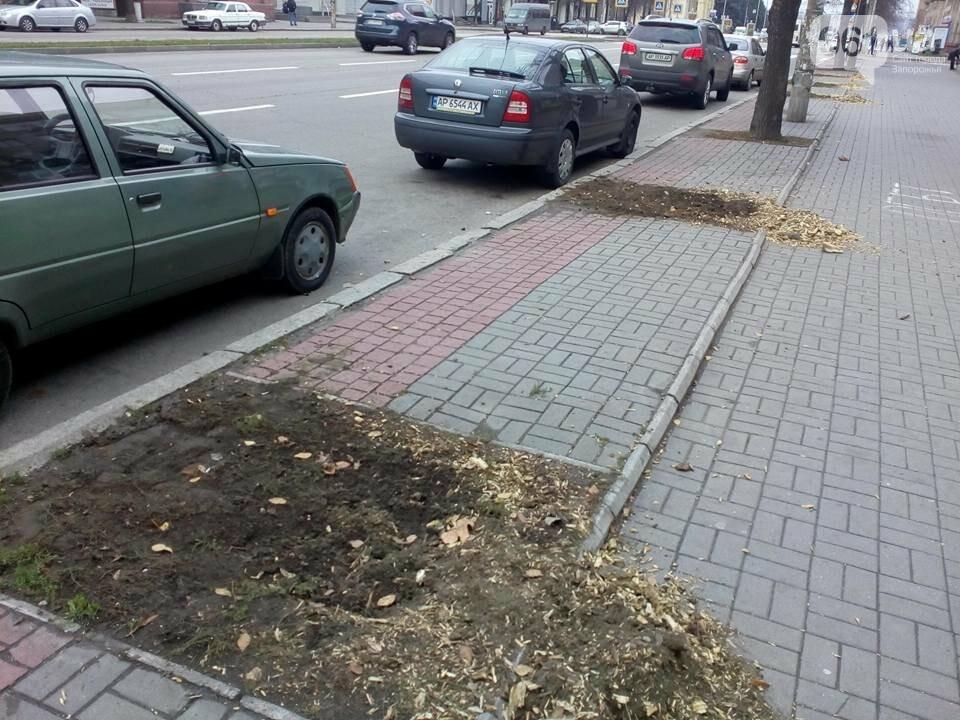 В Запорожье на проспекте спилили липы, посаженные при Поляке, - ФОТО, фото-1