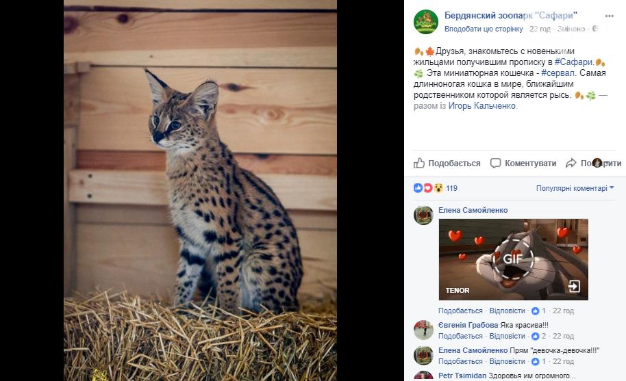 В Запорожской области в зоопарке появилась самая длинноногая кошка, - ФОТО, фото-1