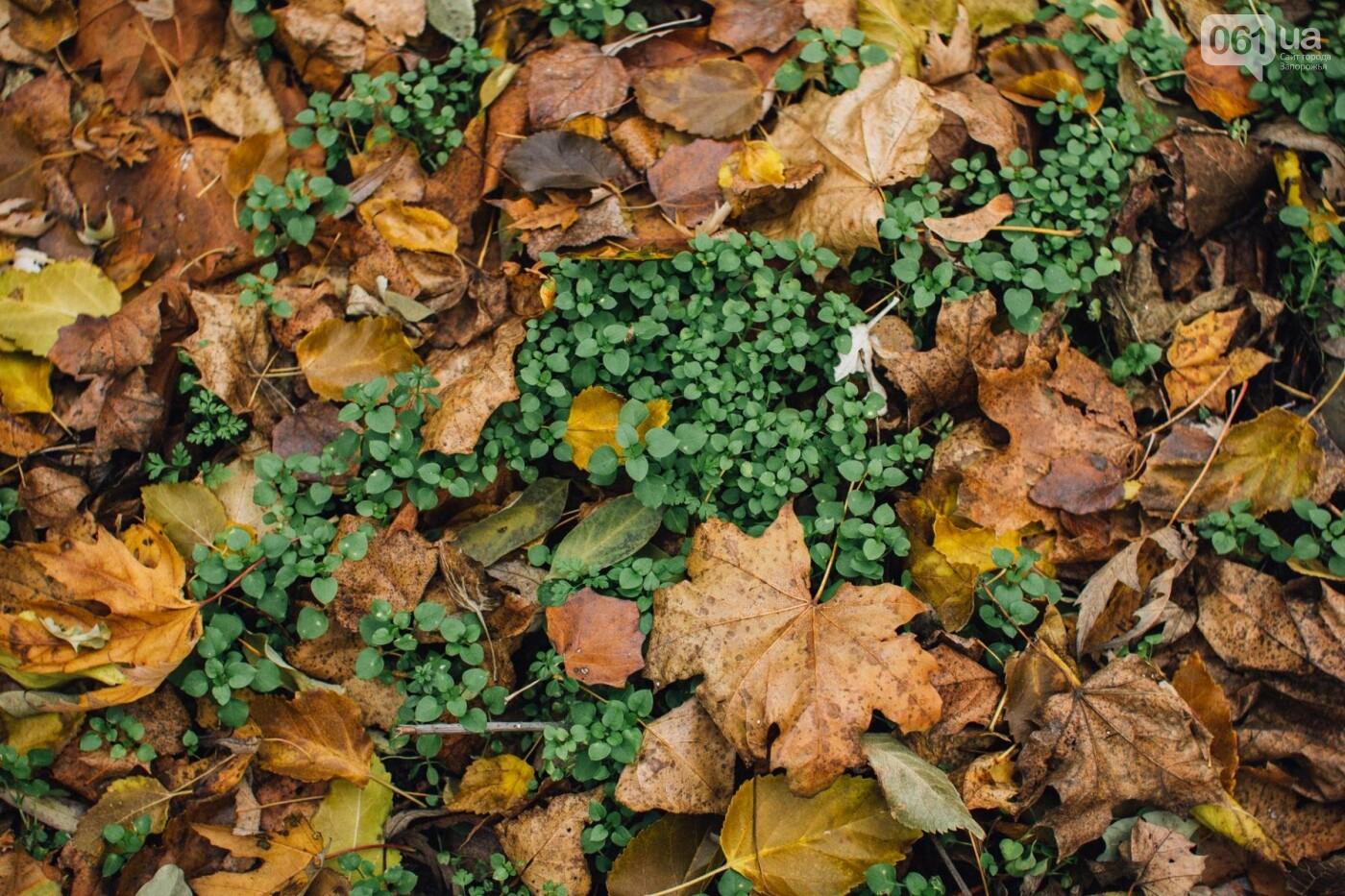 Четыре дня до зимы: как выглядит Хортица поздней осенью, - ФОТОРЕПОРТАЖ, фото-36