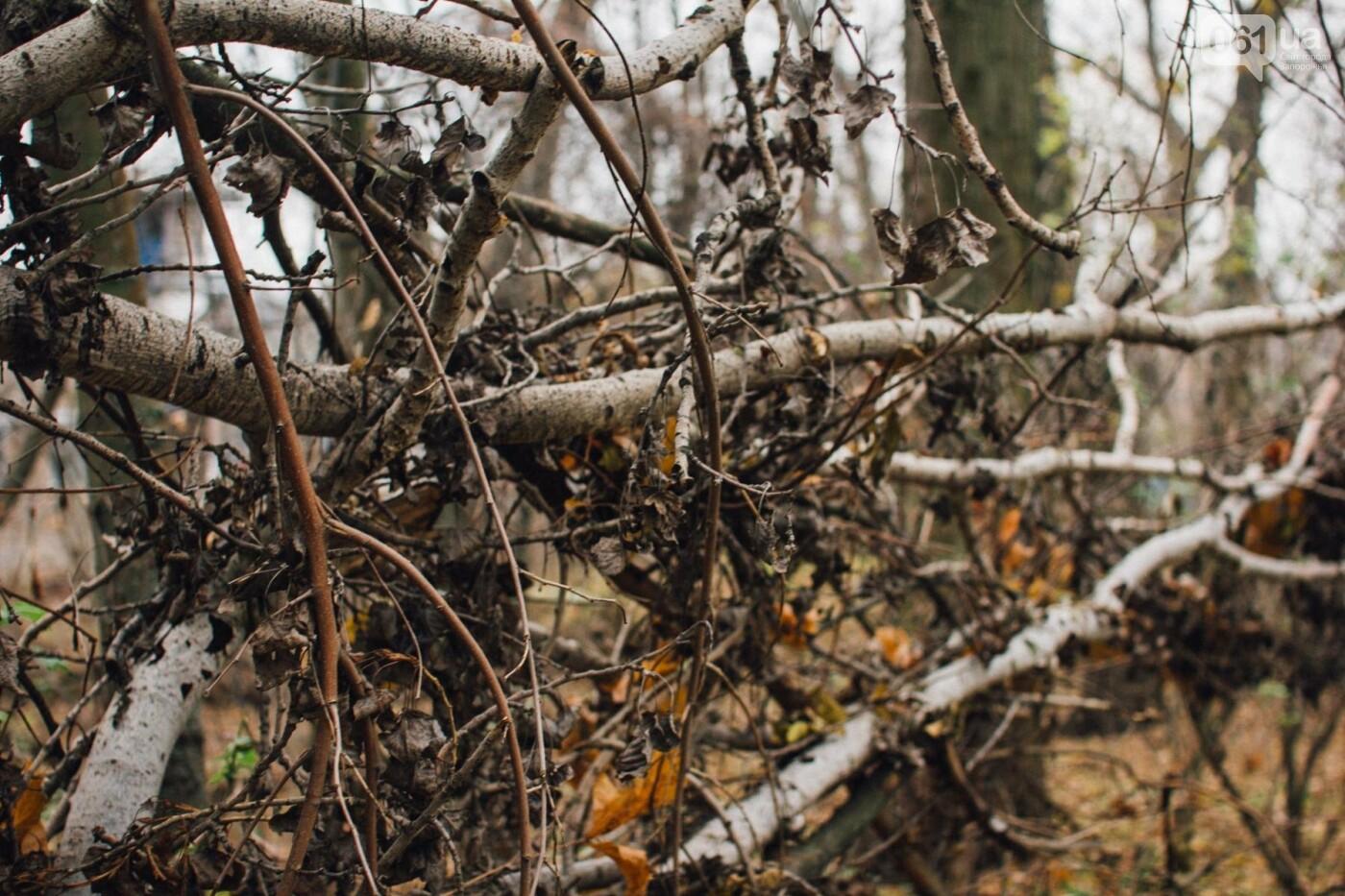Четыре дня до зимы: как выглядит Хортица поздней осенью, - ФОТОРЕПОРТАЖ, фото-18