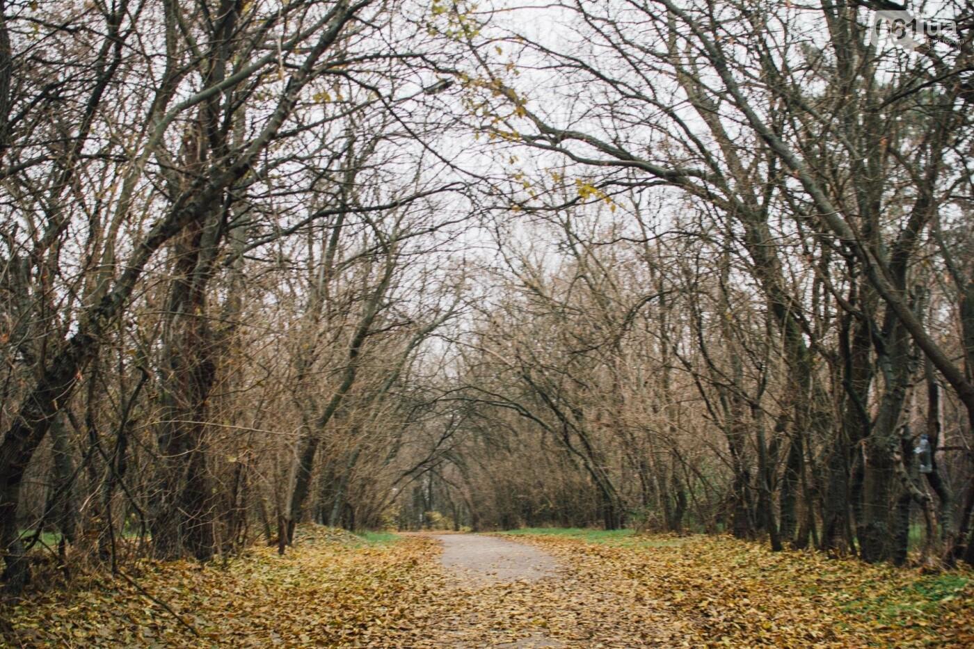 Четыре дня до зимы: как выглядит Хортица поздней осенью, - ФОТОРЕПОРТАЖ, фото-41