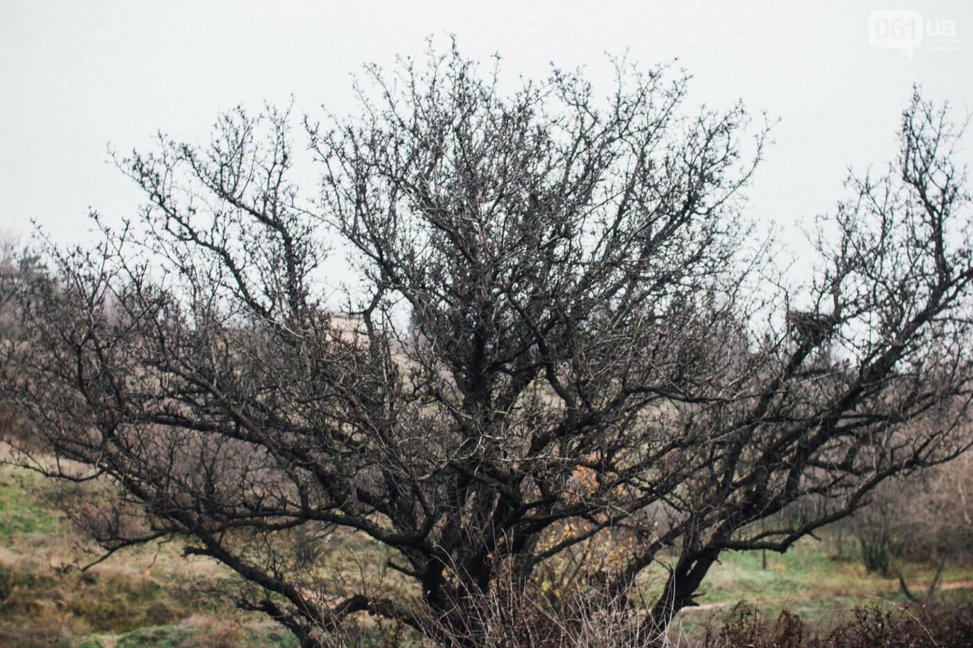 Четыре дня до зимы: как выглядит Хортица поздней осенью, - ФОТОРЕПОРТАЖ, фото-25