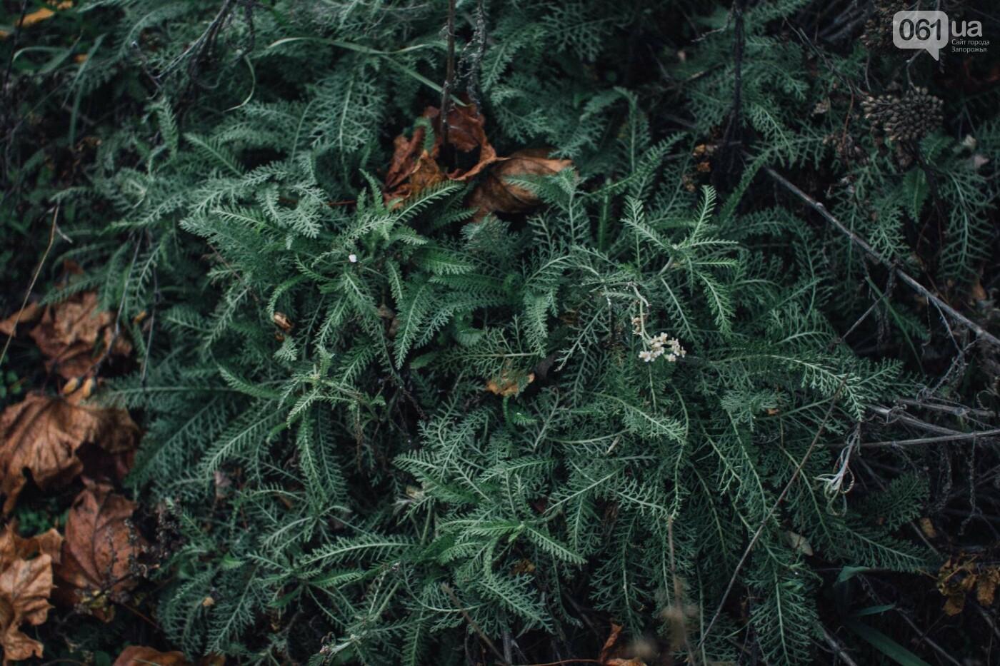 Четыре дня до зимы: как выглядит Хортица поздней осенью, - ФОТОРЕПОРТАЖ, фото-22