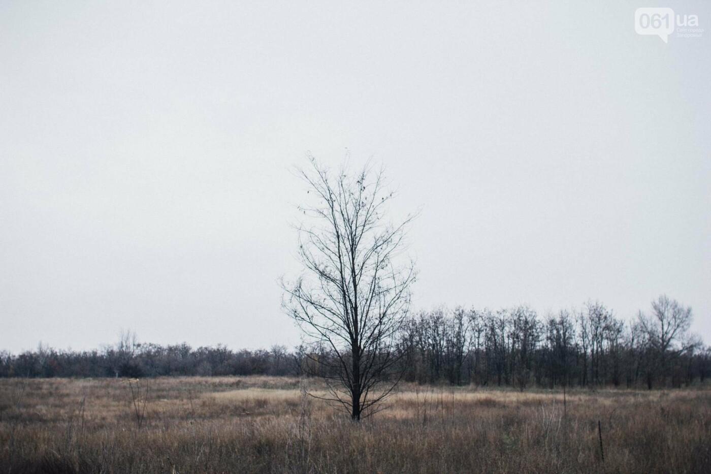 Четыре дня до зимы: как выглядит Хортица поздней осенью, - ФОТОРЕПОРТАЖ, фото-5