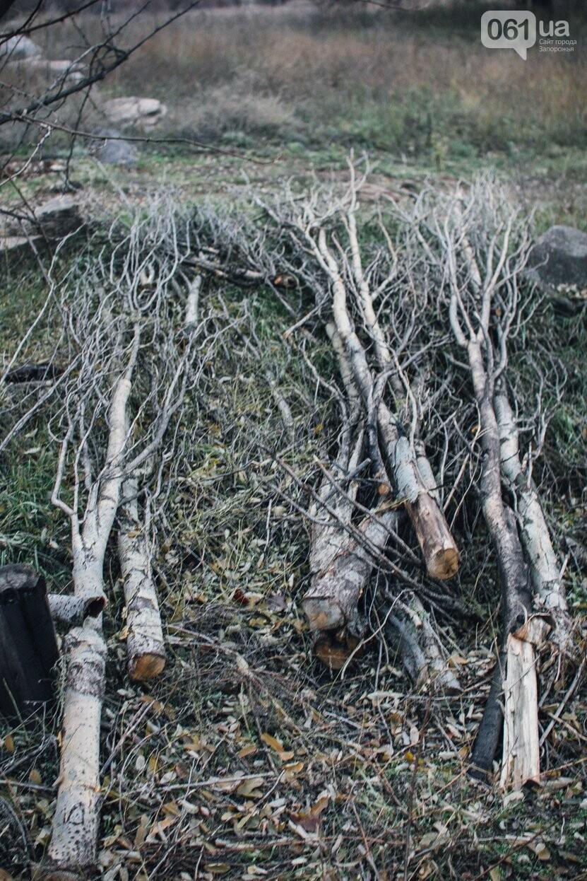 Четыре дня до зимы: как выглядит Хортица поздней осенью, - ФОТОРЕПОРТАЖ, фото-2