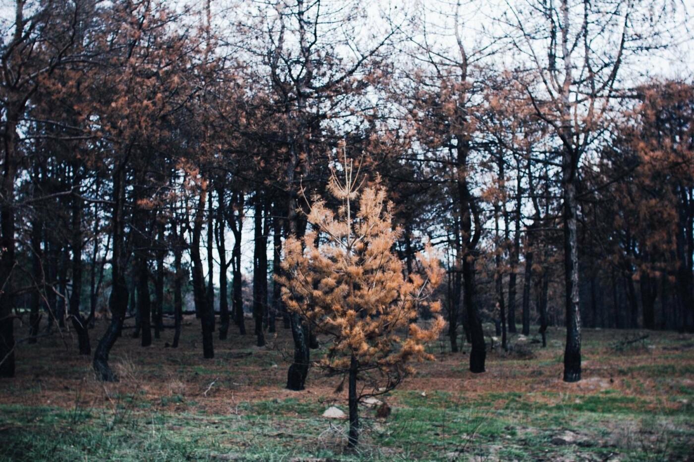 Четыре дня до зимы: как выглядит Хортица поздней осенью, - ФОТОРЕПОРТАЖ, фото-29