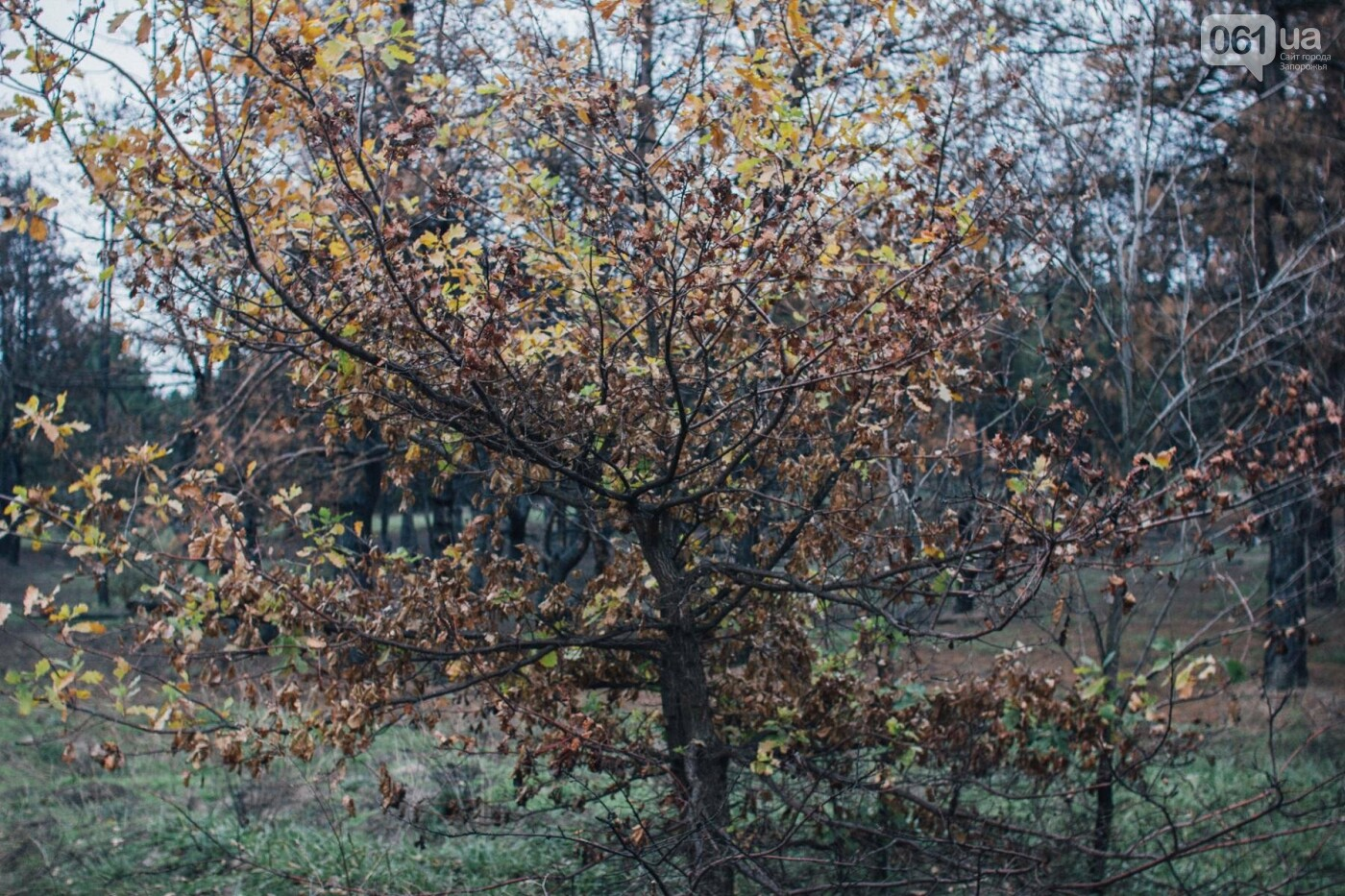 Четыре дня до зимы: как выглядит Хортица поздней осенью, - ФОТОРЕПОРТАЖ, фото-31