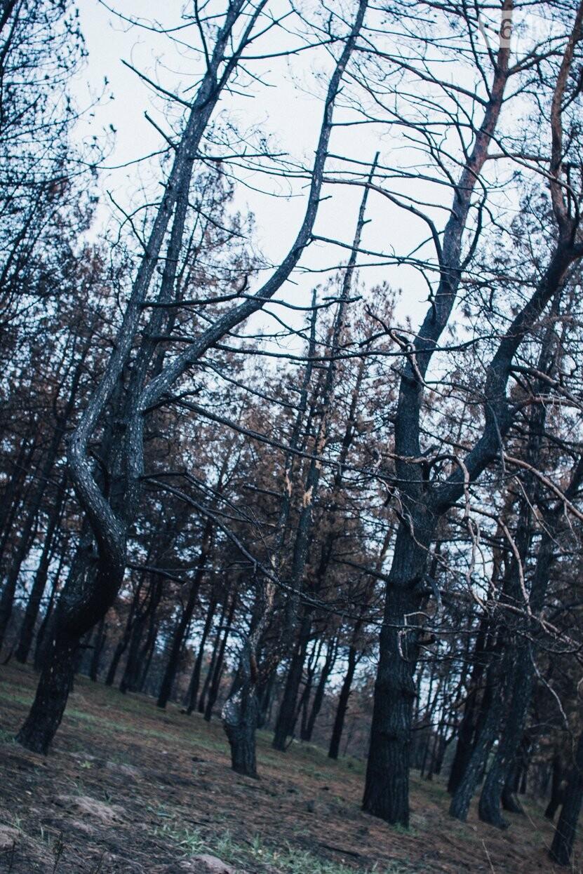 Четыре дня до зимы: как выглядит Хортица поздней осенью, - ФОТОРЕПОРТАЖ, фото-4