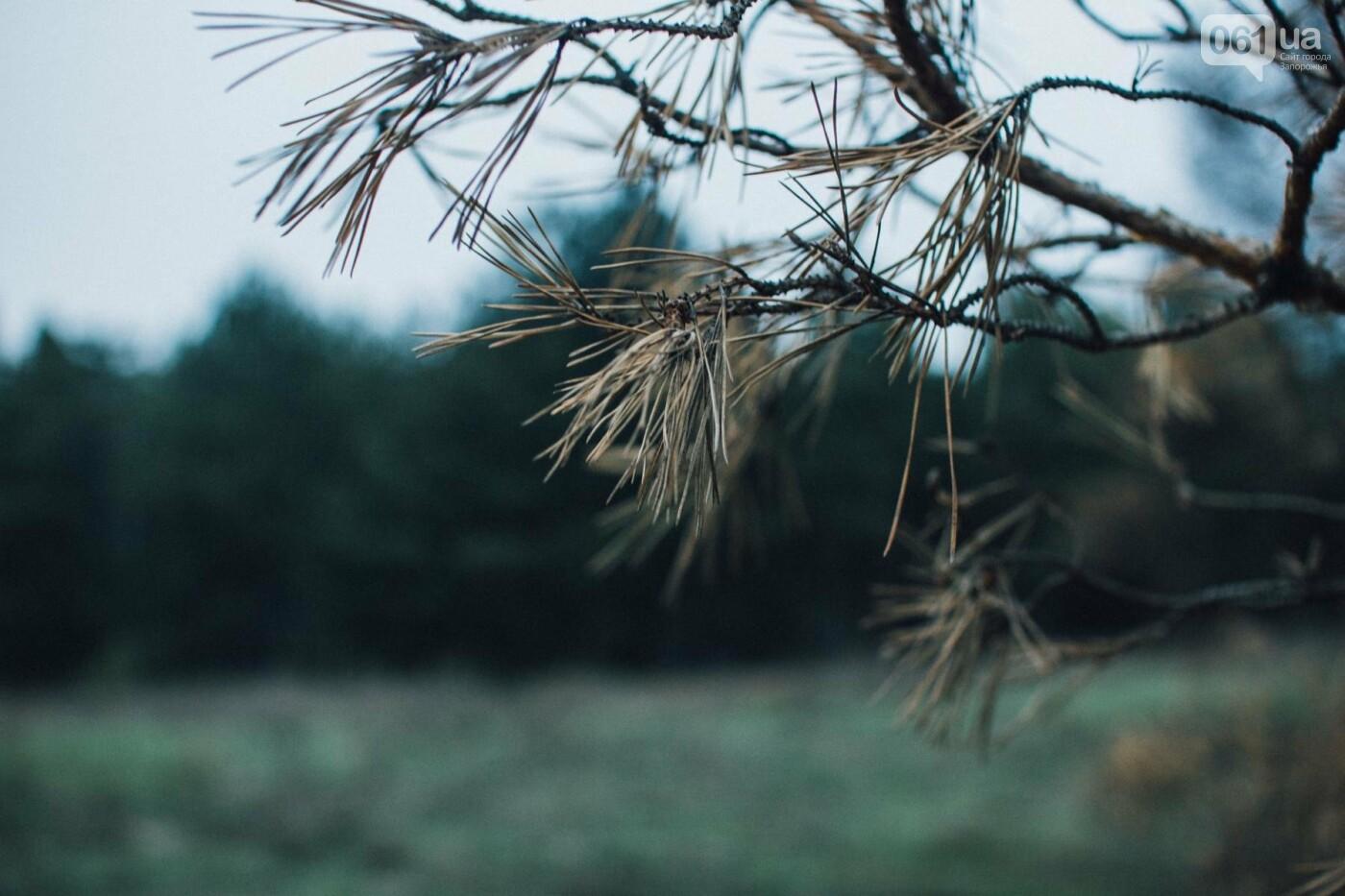 Четыре дня до зимы: как выглядит Хортица поздней осенью, - ФОТОРЕПОРТАЖ, фото-8