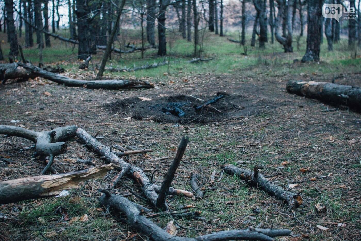 Четыре дня до зимы: как выглядит Хортица поздней осенью, - ФОТОРЕПОРТАЖ, фото-32