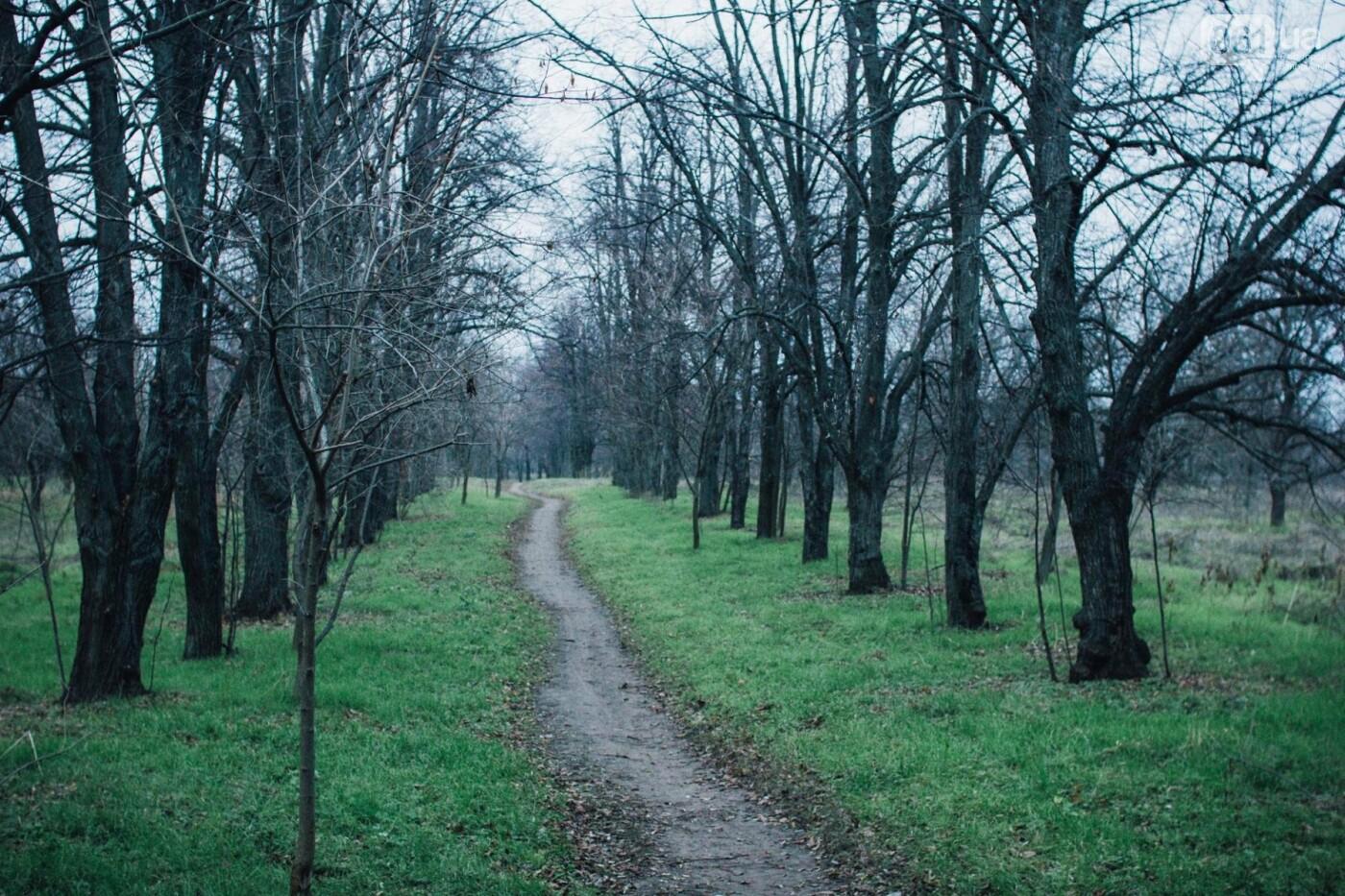 Четыре дня до зимы: как выглядит Хортица поздней осенью, - ФОТОРЕПОРТАЖ, фото-33