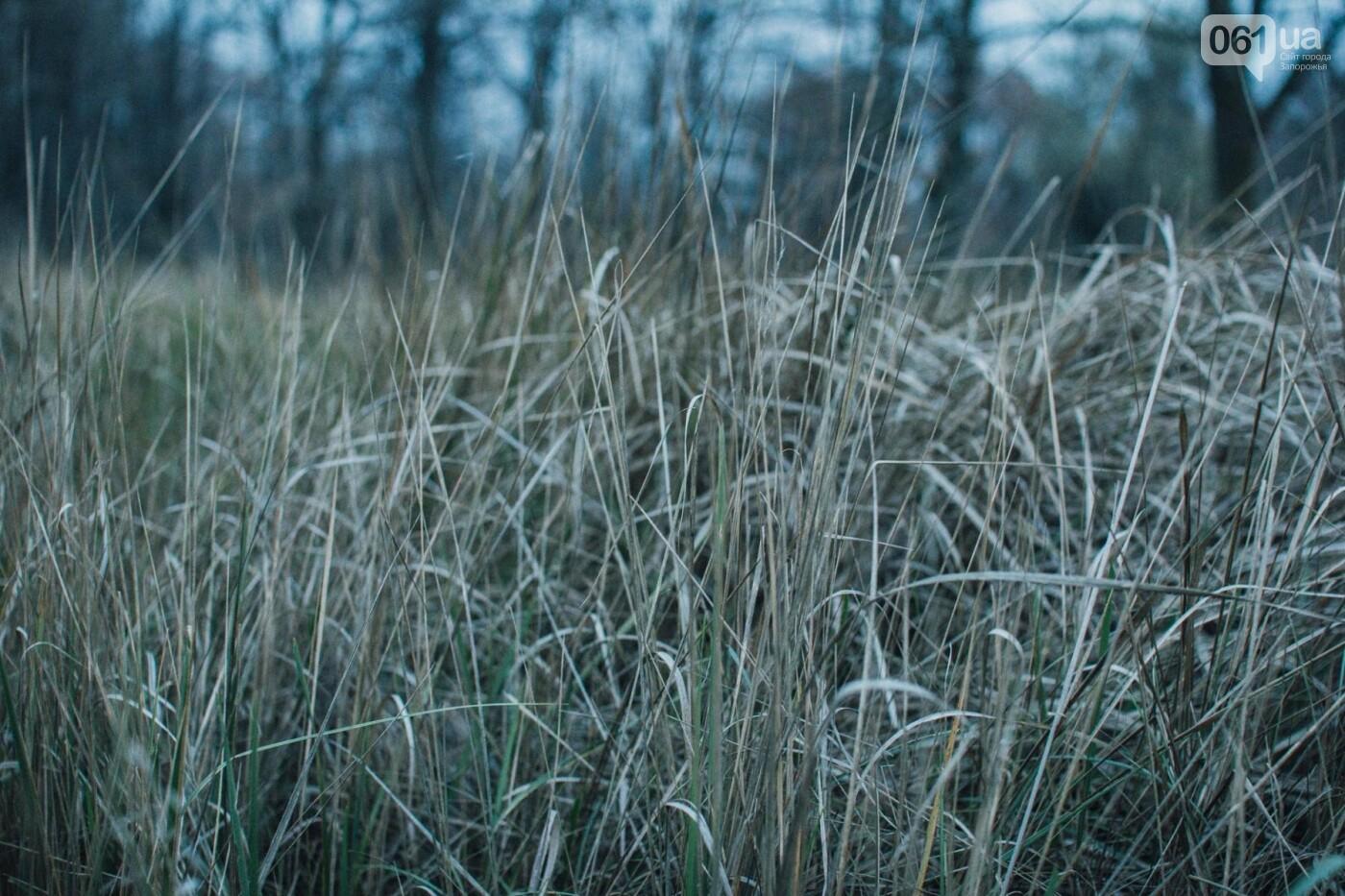 Четыре дня до зимы: как выглядит Хортица поздней осенью, - ФОТОРЕПОРТАЖ, фото-21