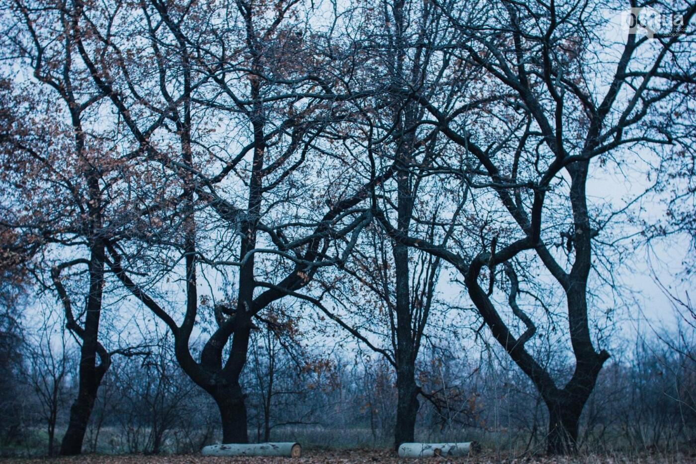 Четыре дня до зимы: как выглядит Хортица поздней осенью, - ФОТОРЕПОРТАЖ, фото-40