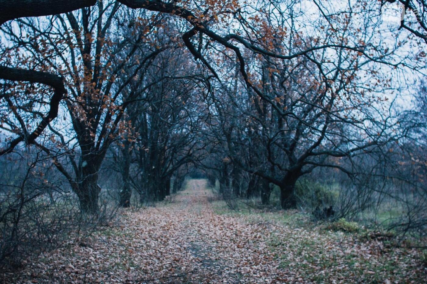 Четыре дня до зимы: как выглядит Хортица поздней осенью, - ФОТОРЕПОРТАЖ, фото-38