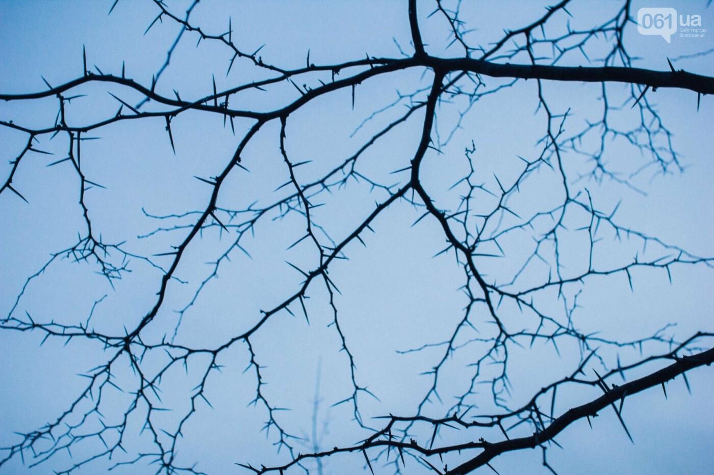 Четыре дня до зимы: как выглядит Хортица поздней осенью, - ФОТОРЕПОРТАЖ, фото-19