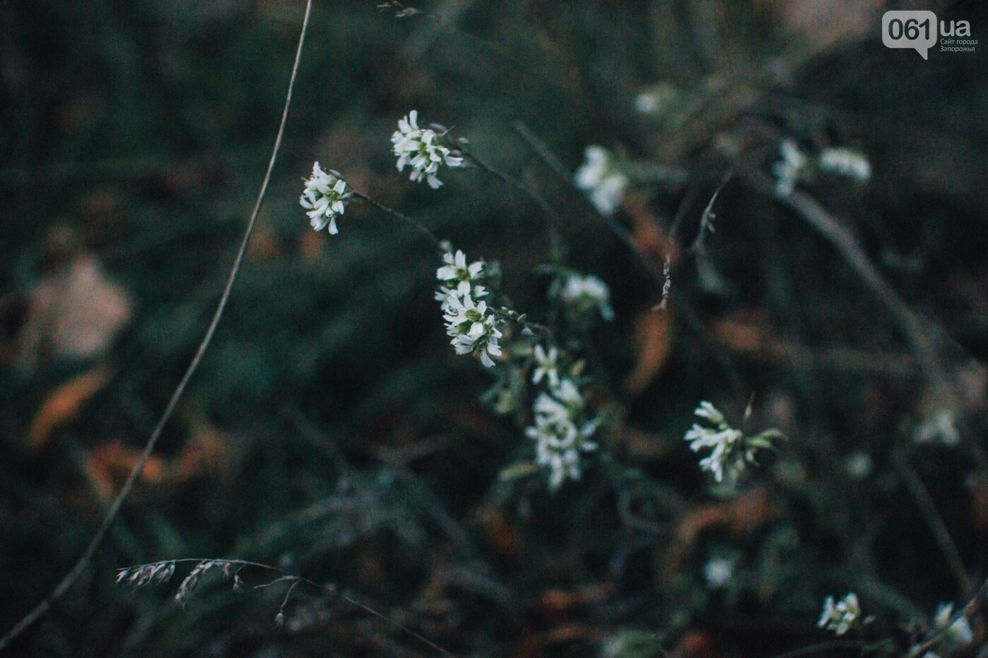 Четыре дня до зимы: как выглядит Хортица поздней осенью, - ФОТОРЕПОРТАЖ, фото-15