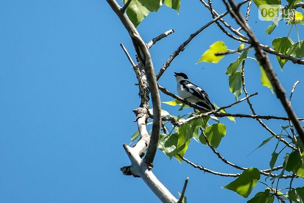 Запорожец сфотографировал в дикой природе сову, сокола и необычных дятлов, - ФОТО, фото-2