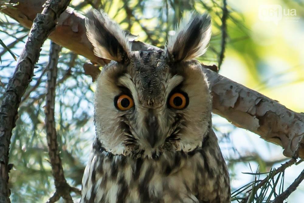 Запорожец сфотографировал в дикой природе сову, сокола и необычных дятлов, - ФОТО, фото-4