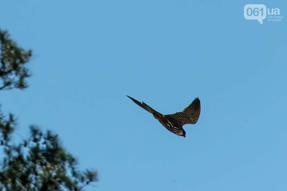Запорожец сфотографировал в дикой природе сову, сокола и необычных дятлов, - ФОТО, фото-1