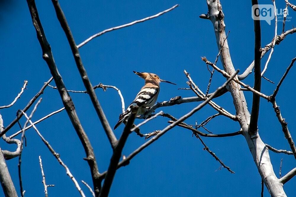 Запорожец сфотографировал в дикой природе сову, сокола и необычных дятлов, - ФОТО, фото-8