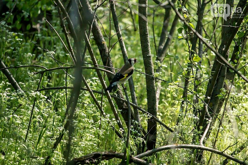 Запорожец сфотографировал в дикой природе сову, сокола и необычных дятлов, - ФОТО, фото-11