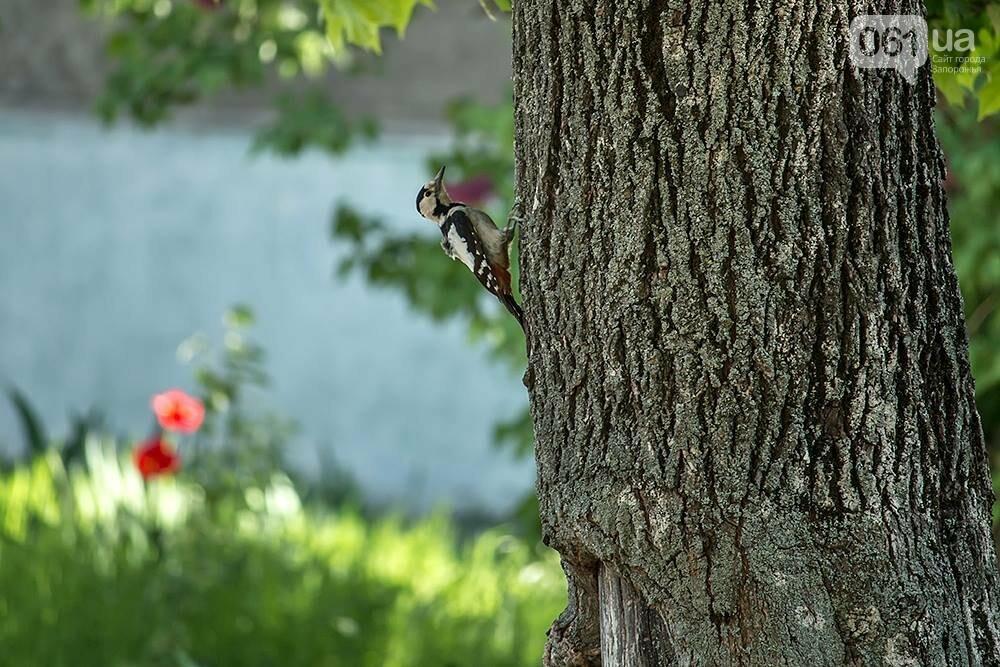 Запорожец сфотографировал в дикой природе сову, сокола и необычных дятлов, - ФОТО, фото-12