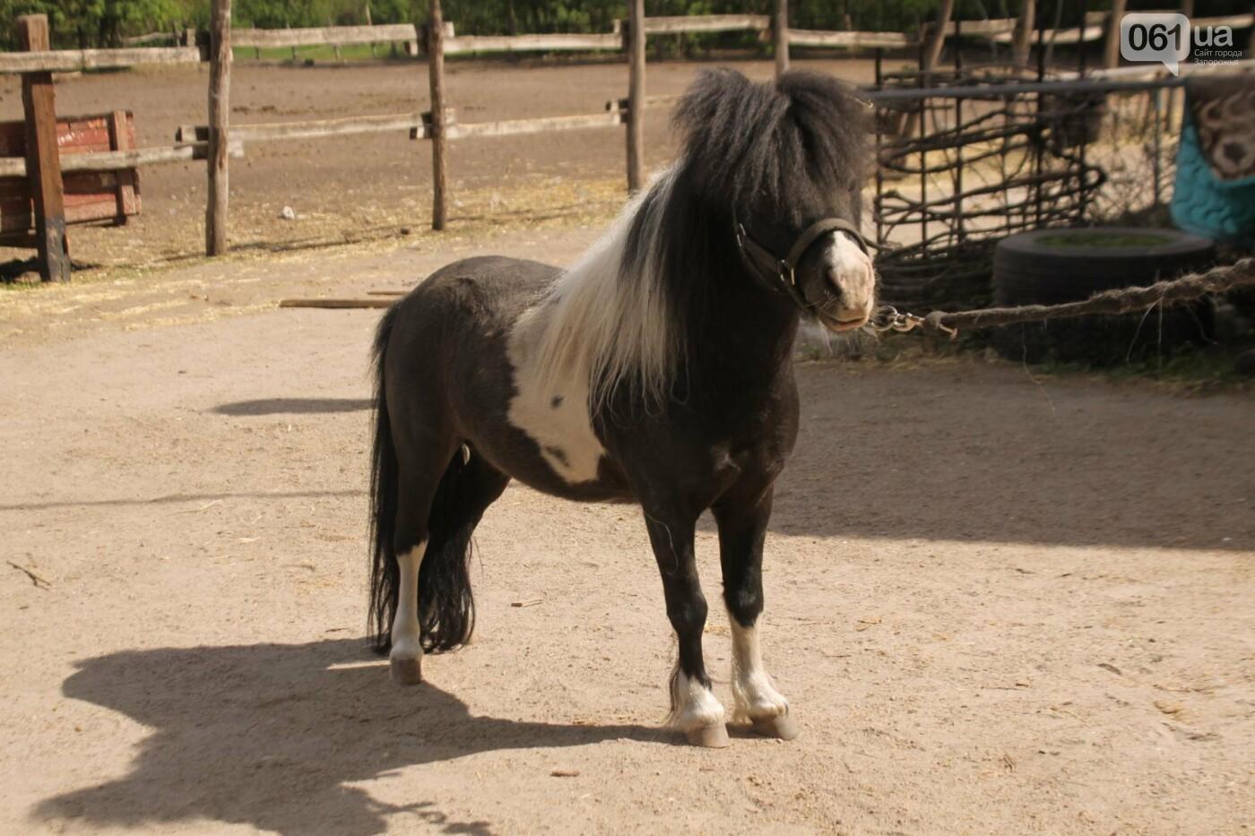 Незабываемое общение с лошадьми: экскурсия в конноспортивный клуб «Патриот», – ФОТОРЕПОРТАЖ, фото-22