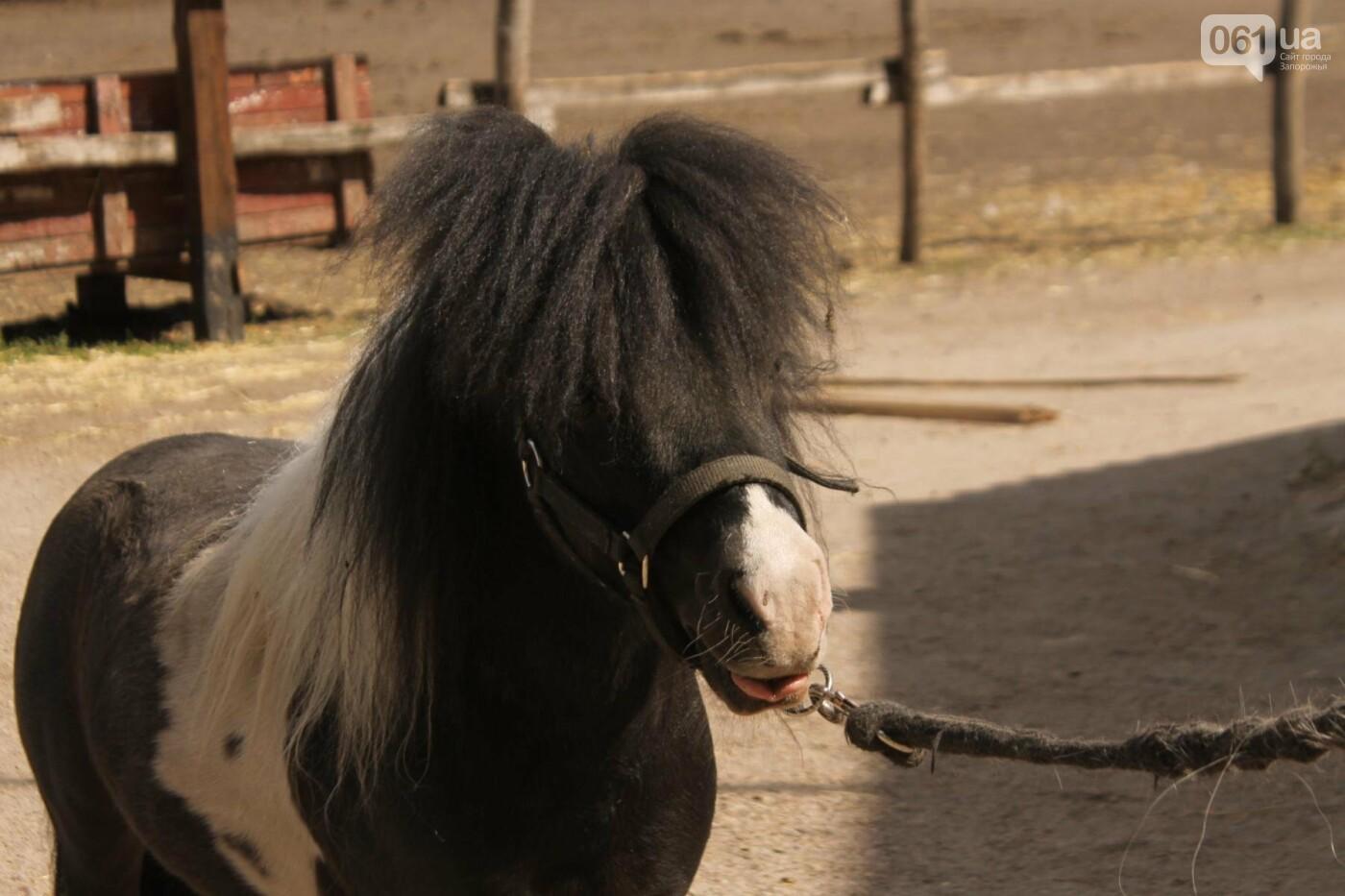 Незабываемое общение с лошадьми: экскурсия в конноспортивный клуб «Патриот», – ФОТОРЕПОРТАЖ, фото-23