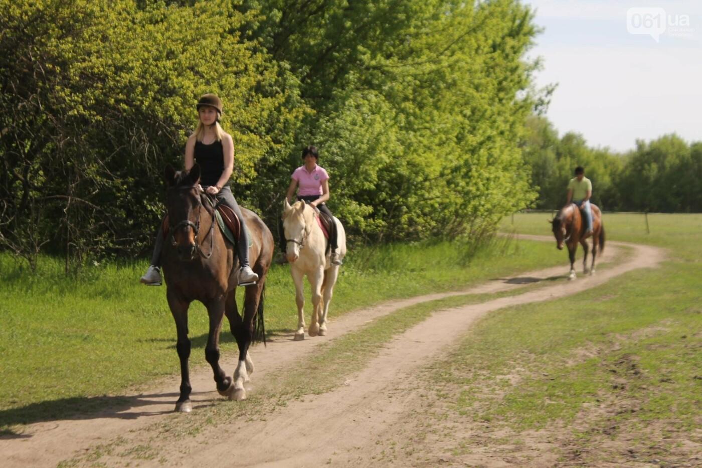 Незабываемое общение с лошадьми: экскурсия в конноспортивный клуб «Патриот», – ФОТОРЕПОРТАЖ, фото-15