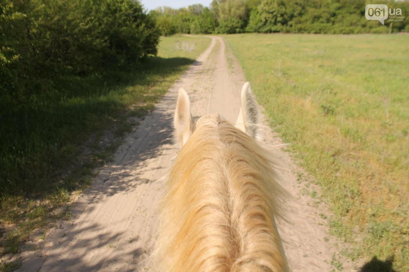 Незабываемое общение с лошадьми: экскурсия в конноспортивный клуб «Патриот», – ФОТОРЕПОРТАЖ, фото-17