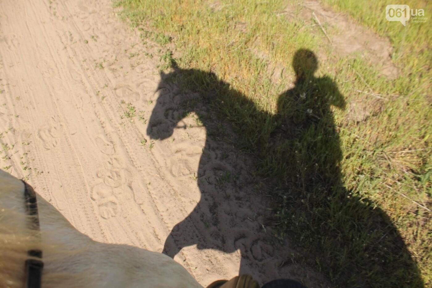 Незабываемое общение с лошадьми: экскурсия в конноспортивный клуб «Патриот», – ФОТОРЕПОРТАЖ, фото-18