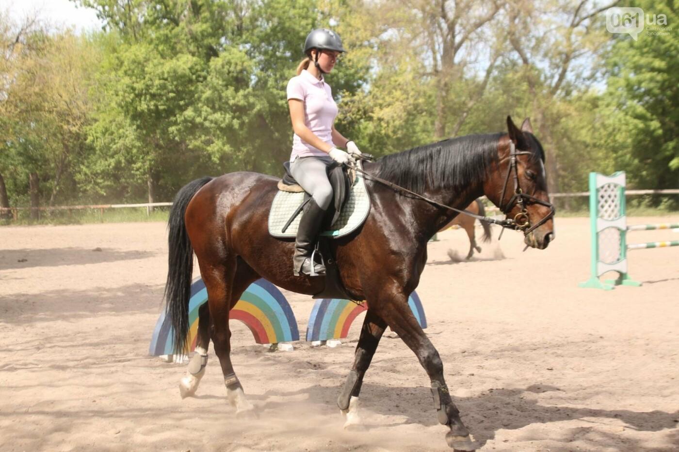 Незабываемое общение с лошадьми: экскурсия в конноспортивный клуб «Патриот», – ФОТОРЕПОРТАЖ, фото-1
