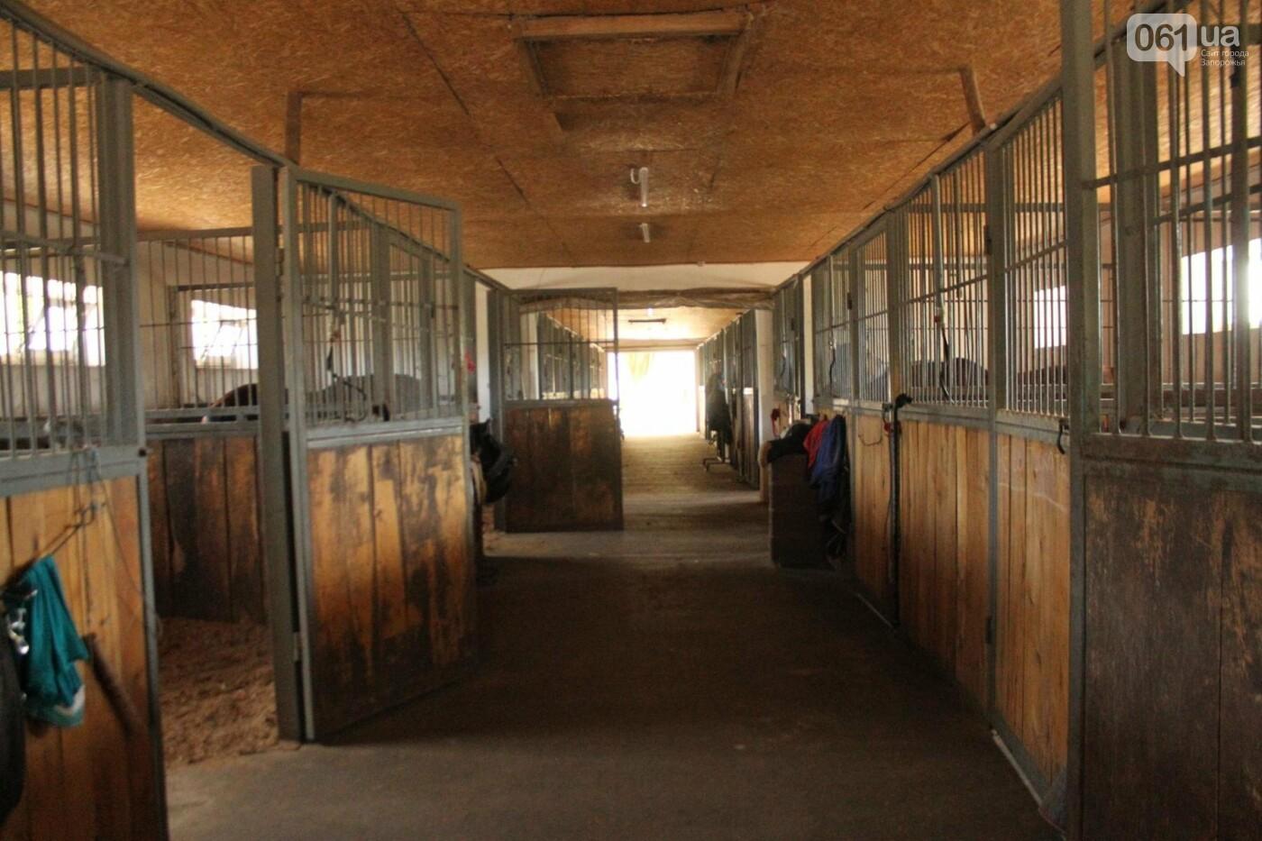 Незабываемое общение с лошадьми: экскурсия в конноспортивный клуб «Патриот», – ФОТОРЕПОРТАЖ, фото-6
