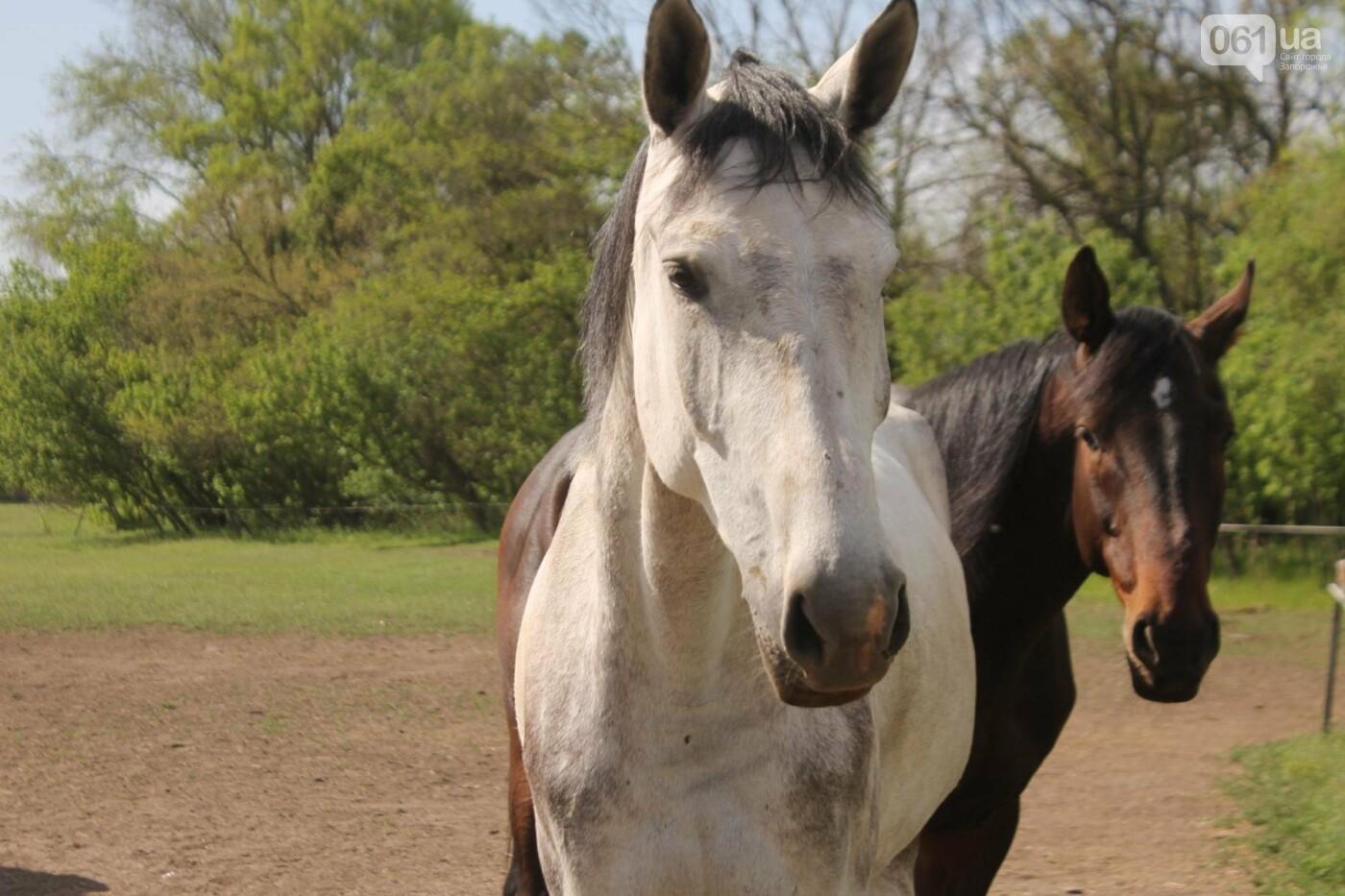 Незабываемое общение с лошадьми: экскурсия в конноспортивный клуб «Патриот», – ФОТОРЕПОРТАЖ, фото-9